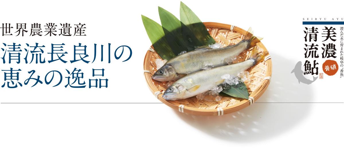 澄んだ水に育まれた岐阜の「香魚」美濃[養殖]清流鮎